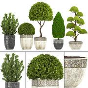 정원 식물 수집 3d model