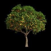 Orange Tree 5 3d model