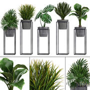 Collection Exotic plants 3d model