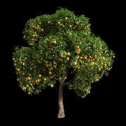 Orange Tree 15 3d model