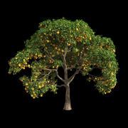 Апельсиновое дерево 8 3d model