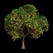 Orange Tree 10 3d model