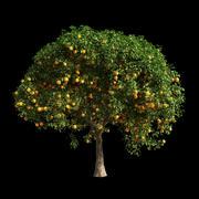 橙树14 3d model