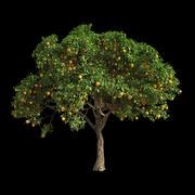 橙树6 3d model