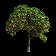 橙树1 3d model