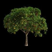 Orange Tree 2 3d model