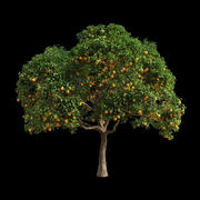 Orange Tree 3 3d model