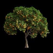 Orange Tree 4 3d model