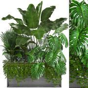 Samling Exotiska växter 3d model