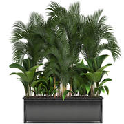 이국적인 식물 3d model