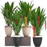 Kolekcja Rośliny egzotyczne Heliconia 3d model