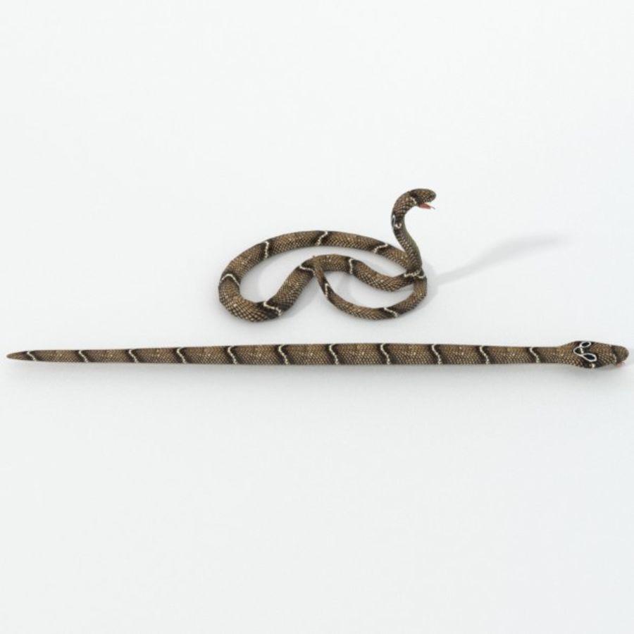 眼镜蛇蛇 royalty-free 3d model - Preview no. 4