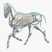 Running Horse Pose Envelope with Skeleton 3D Model 3d model