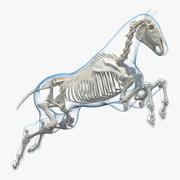 Jumping Horse Envelope with Skeleton 3D Model 3d model