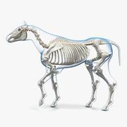 Horse Envelope with Skeleton Rigged 3D Model 3d model