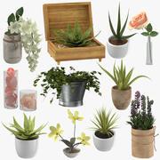 Декоративные Растения 3d model
