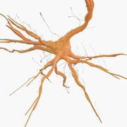 Célula nervosa 3d model