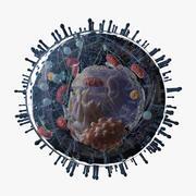 Mänsklig cell 3d model