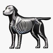 拉布拉多+骨架 3d model