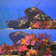 Coral Reef Animation 3d model