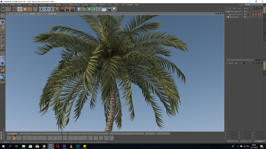 Beach Palm Tree Model royalty-free 3d model - Preview no. 4