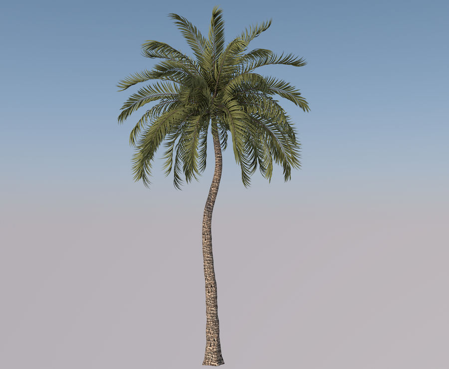 Beach Palm Tree Model royalty-free 3d model - Preview no. 1