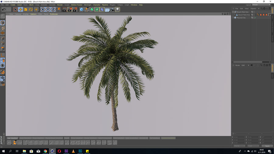 Beach Palm Tree Model royalty-free 3d model - Preview no. 7