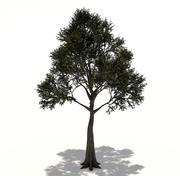 Modelo 3d da árvore Ceiba 3d model