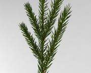 Spruce branches 3d model