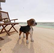 Dog Beagle 3d model