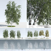 Three Season Trees: Birch (+Growfx) 3d model