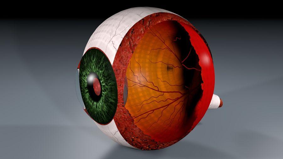 Анатомия человеческого глаза royalty-free 3d model - Preview no. 5