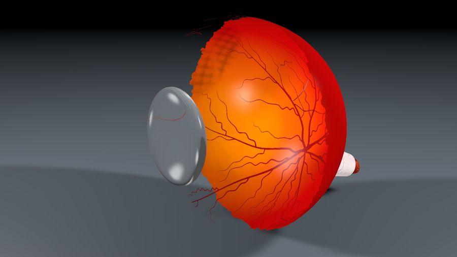 Анатомия человеческого глаза royalty-free 3d model - Preview no. 3