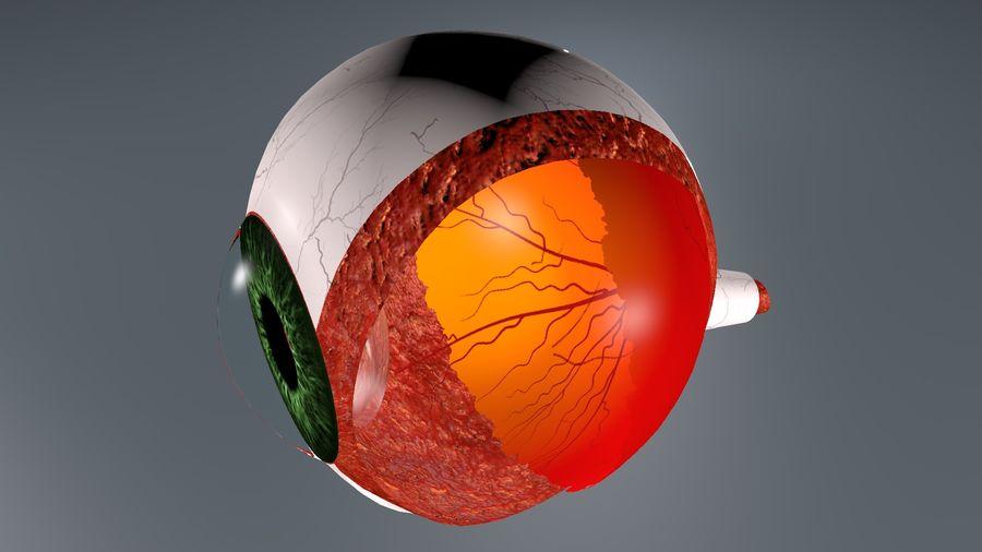 Анатомия человеческого глаза royalty-free 3d model - Preview no. 7