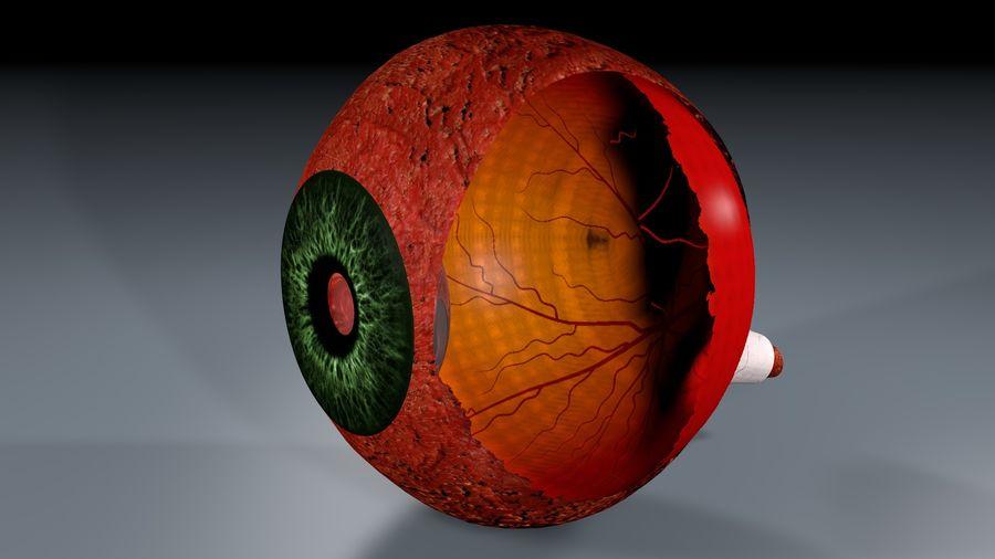 Анатомия человеческого глаза royalty-free 3d model - Preview no. 4