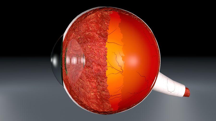 Анатомия человеческого глаза royalty-free 3d model - Preview no. 6