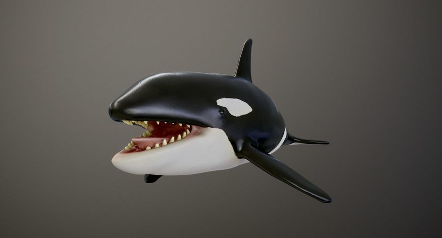 Orca Orca royalty-free modelo 3d - Preview no. 2