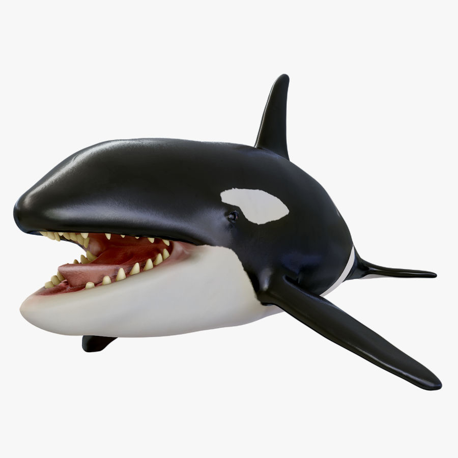 Orca Orca royalty-free modelo 3d - Preview no. 1