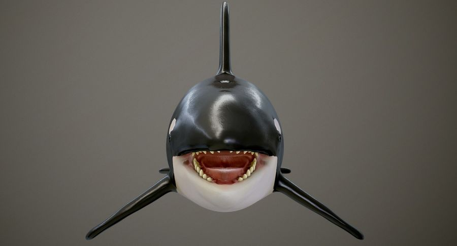 Orca Orca royalty-free modelo 3d - Preview no. 7