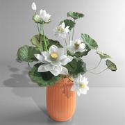 Vas-vattenlilja 3d model
