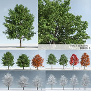 Three Season Trees 3: Maple (+GrowFX) 3d model