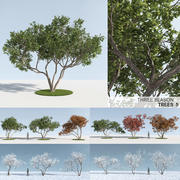 Three Season Trees 5 (+ GrowFX) 3d model