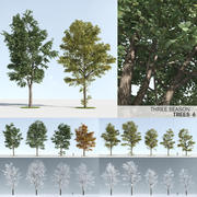 Three Season Trees 6 (+GrowFX) 3d model