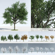 Üç Mevsim Ağacı 9 3d model