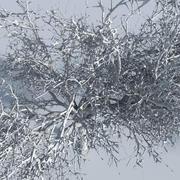 Árvores de três estações 9 3d model