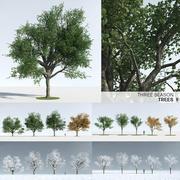 3つの季節の木9 3d model