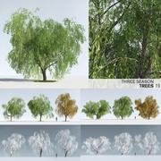 Three Season Trees 13: Weeping Willow (+Growfx) 3d model