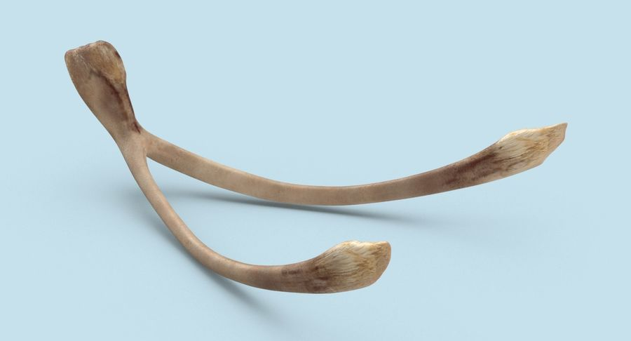 Wishbone royalty-free 3d model - Preview no. 3