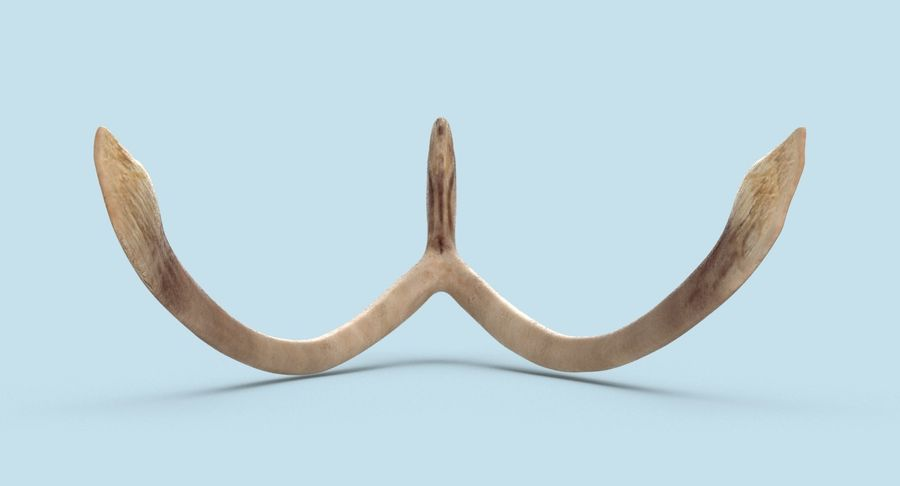 Wishbone royalty-free 3d model - Preview no. 8