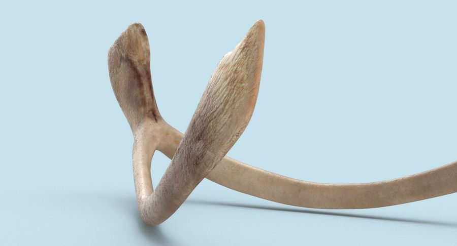 Wishbone royalty-free 3d model - Preview no. 11